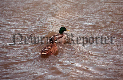 02w6N2 d_c Floods ducks
