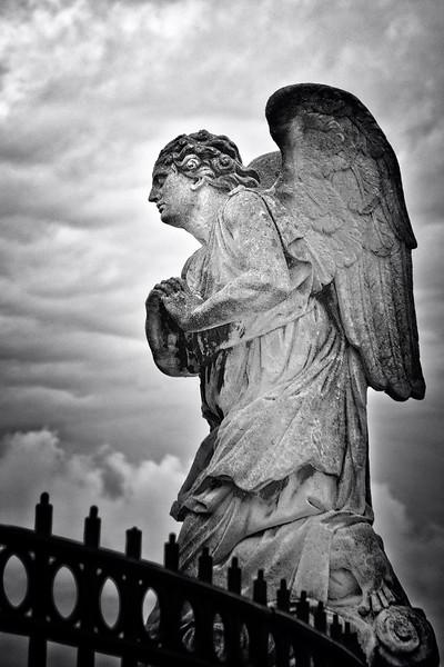 Angels in Avignon
