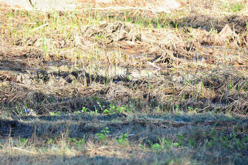 Find the Snipes , there are two in here - 12/09/2014 - Poway Creek