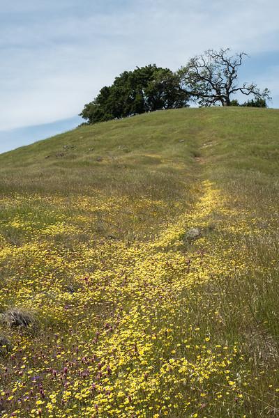 Edgewood_Park_wildflowers-33.jpg