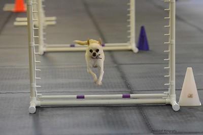 Dinky Dogs TDAA Agility - February 7-8, 2015