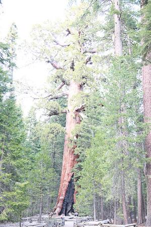 Yosemite South - Apr 14