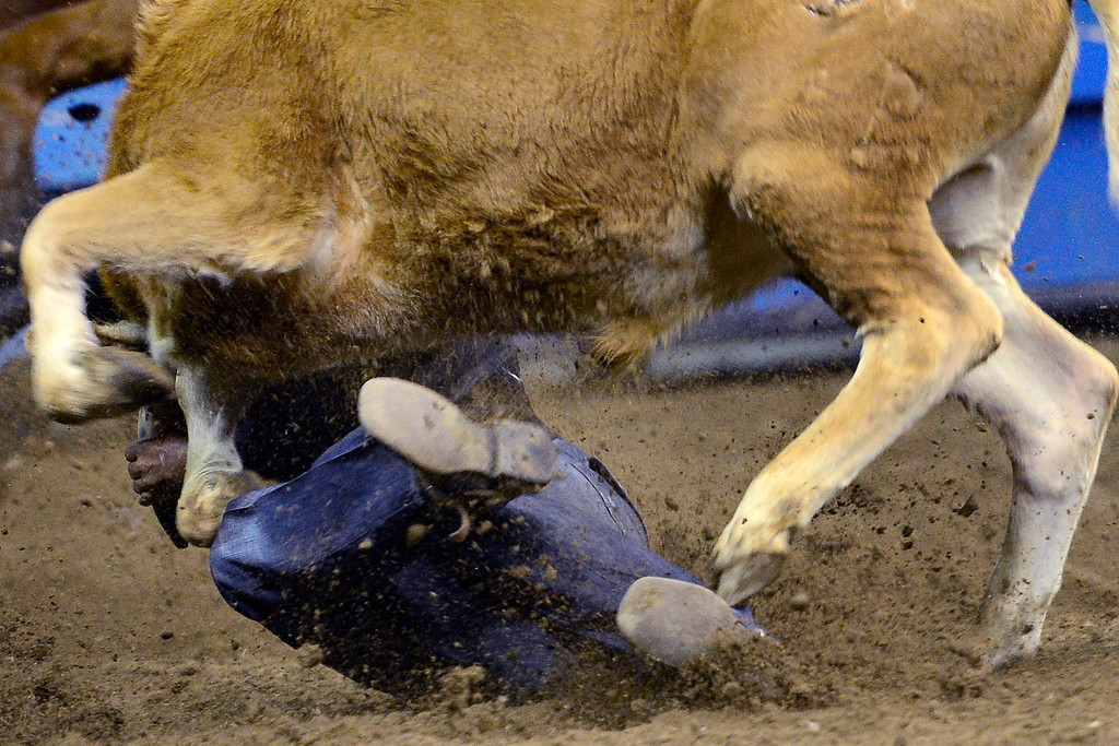 . DENVER, CO. - JANUARY 21: Rodney Demry wrestles with his steer during the steer wrestling performance at the National Western Stock Show Martin Luther King Heritage Rodeo January 21, 2013 (Photo By AAron Ontiveroz / The Denver Post)