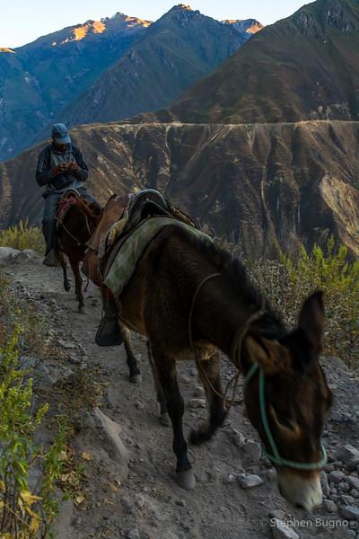 Colca Canyon-1336.jpg
