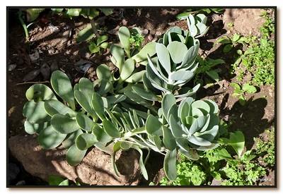 Julia's Garden II