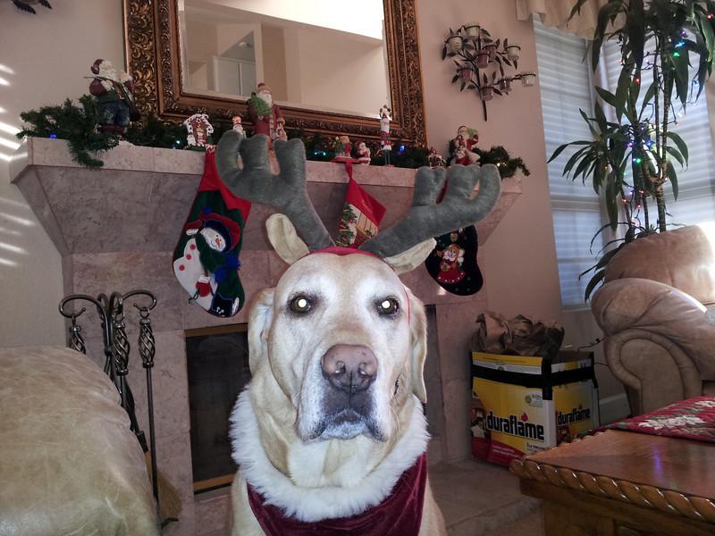 Christmas Dogdeer