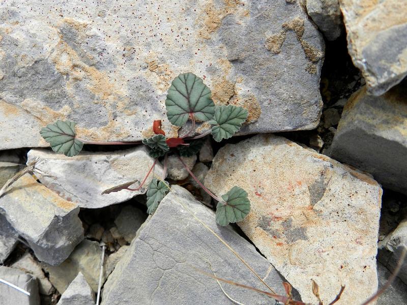 Rocks and plant.jpg