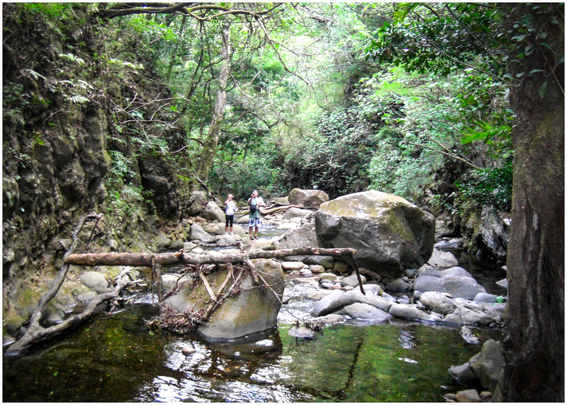 Costa Rica - Canopy Tour (120) F.jpg