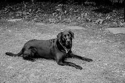 HIGH  RES DOG PICS B & W