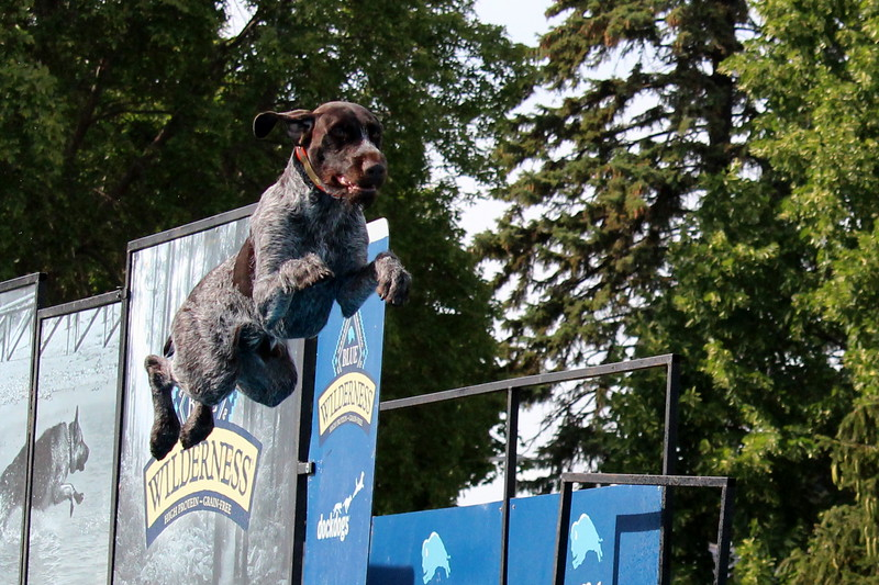 2015.8.6 Winnebago County Fair Dock Dogs (94).JPG