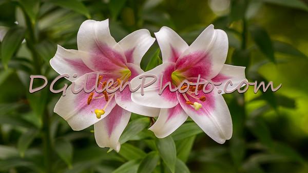 2015 05 16 S.A. Botanical Gardens Macro