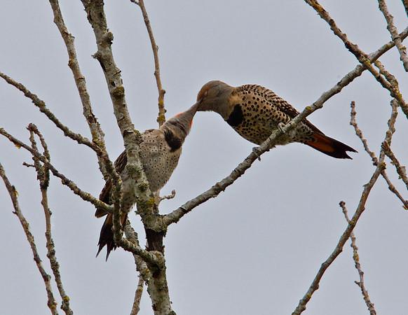 Birds of Oaks Bottom Wildlife Refuge
