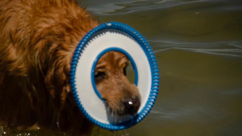 PuppyParty18-190.jpg