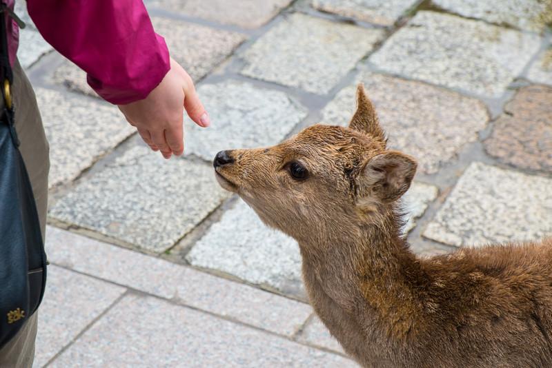 Nara Day 5 (209 of 374).jpg