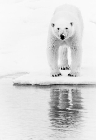 Arctic Svalbard