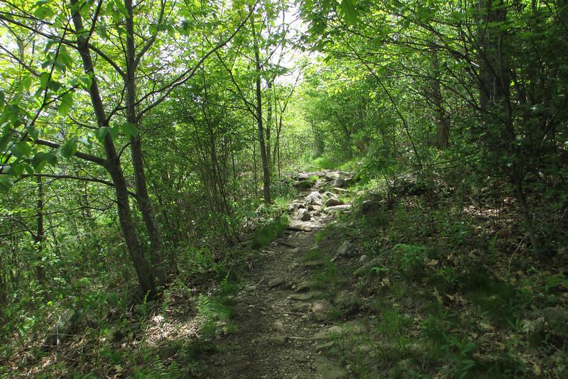 Graveyard Ridge Trail (5,250')