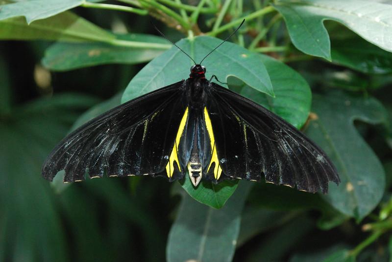 Denver Butterfly Pavilion 2432063171.jpg