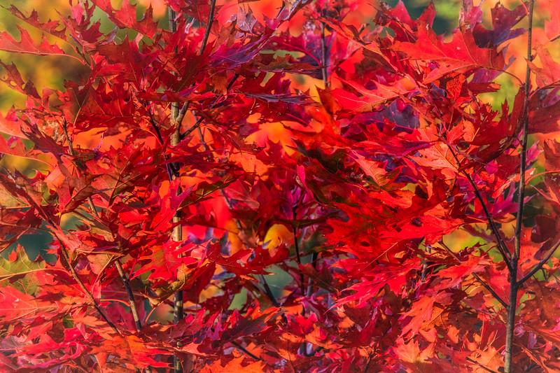 Vermont Fall 2019-3.jpg