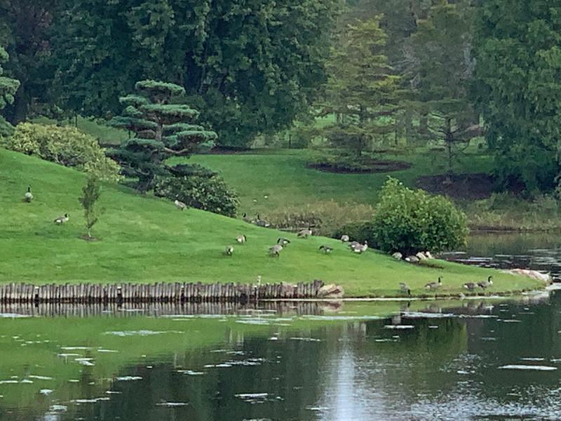 Chicago Botanic Garden 125.jpg