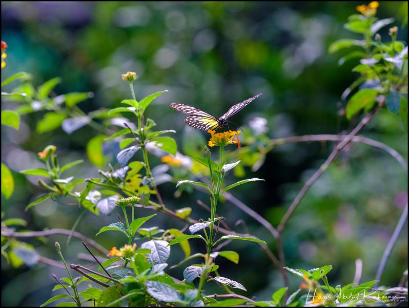 200104 KL Butterfly Park 36.jpg