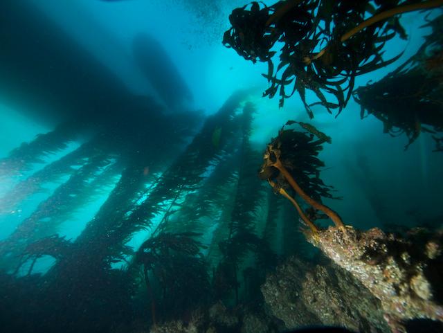 Roger Carlson Olympus E330 & 7-14mm lens Ikelite DS125 strobe 2/23 San Clemente, Fish Hook Reef Looking up at the Ocean Odyssey