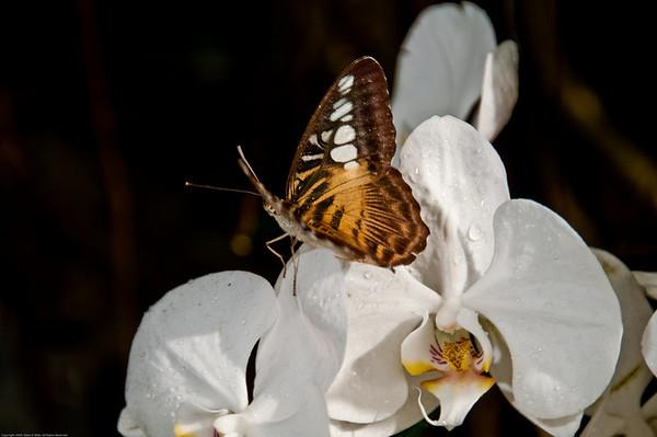La Ferme Des Papillions