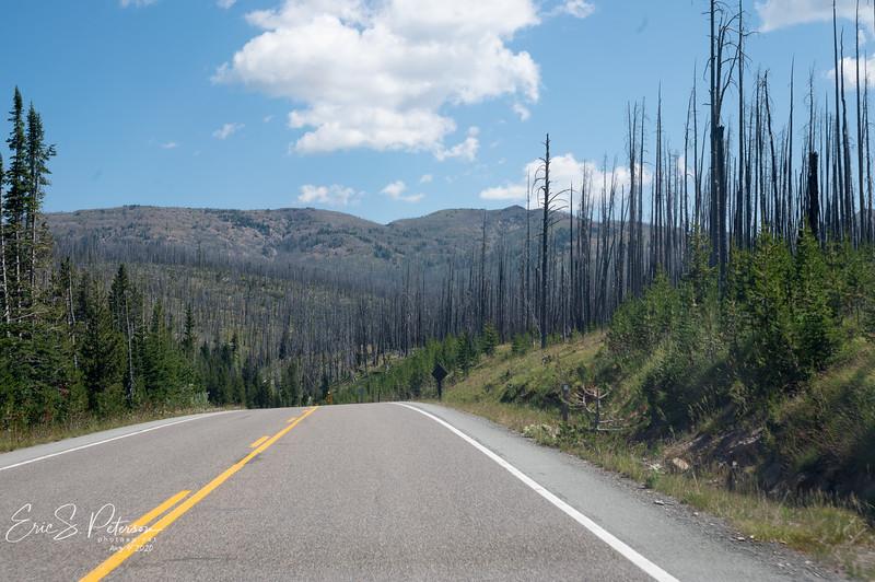 Yellowstone-20200804-8443.jpg