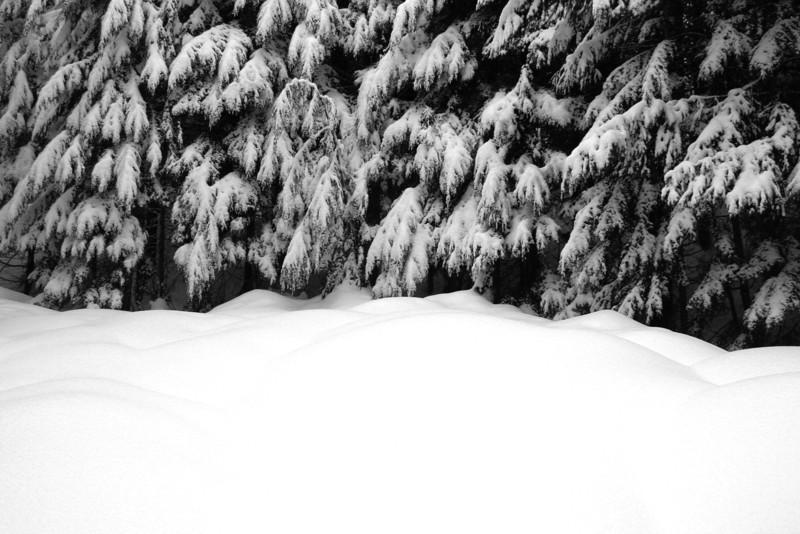 070105-146BW (Treescape; Cedars, Snow).jpg