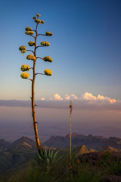 Big_Bend_National_Park_Agave_Bloom_South_Rim_View_Sunset_DSC2010.jpg