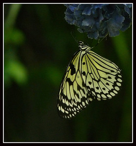 Butterfly House - Collodi