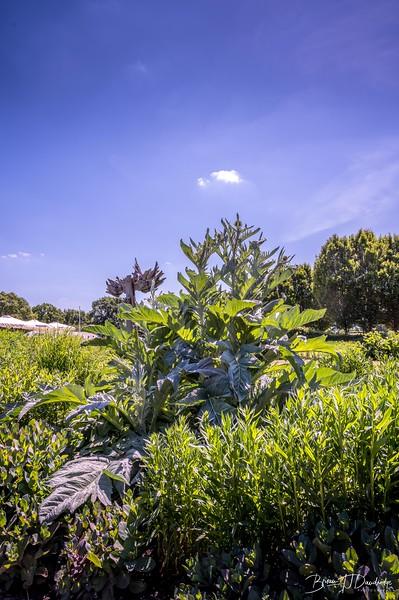 Sussex Prairie Gardens Z6-3687.jpg