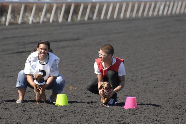 Wiener Dog Races September 14, 2013