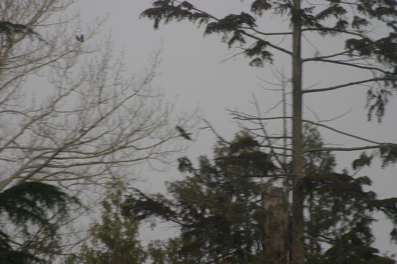 Vancouver - Feb 2005 145.JPG