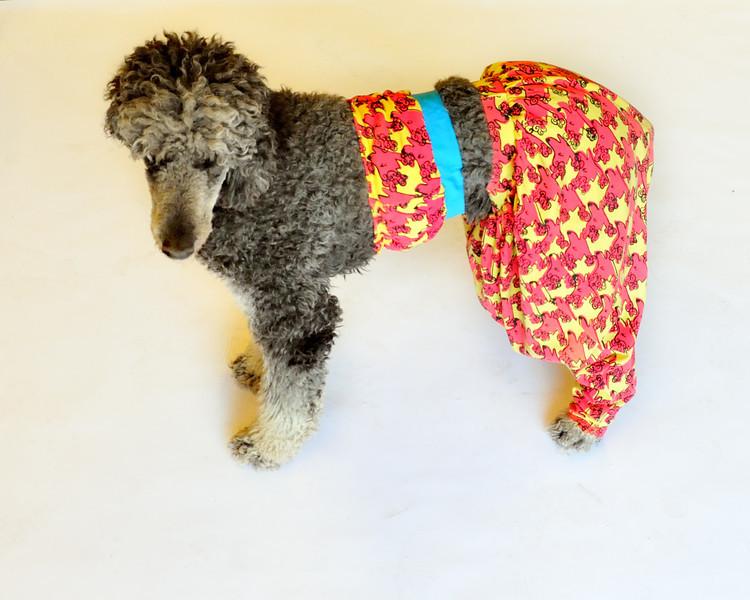 Costumed Dog Photos - Jesse Ascher 105_1.jpg