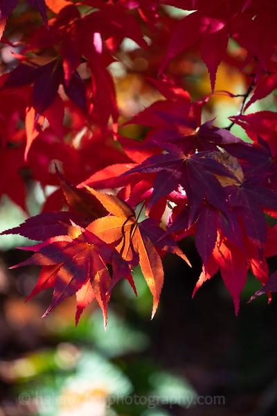 Himalayan Garden Oct 18-22.jpg