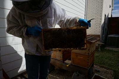 Swarm inspection 1