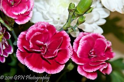 Indoor Flowers 2011