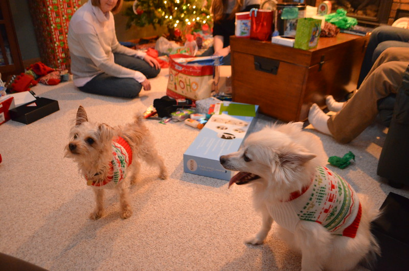 Two dogs and two ugly Christmas sweaters.