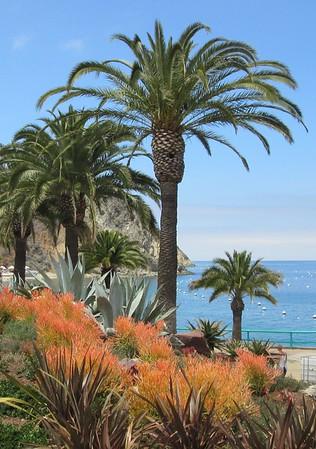 Santa Catalina Island, May 14-15, 2016