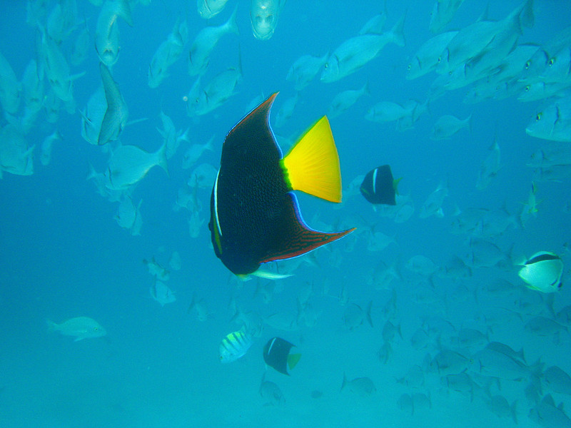 Diving in the Galapagos (172 of 392)