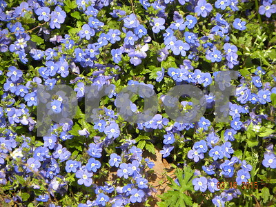 georgia-blue-welcomes-spring-flowers