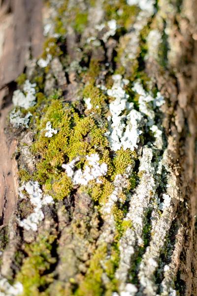 Moss on the Tree 15