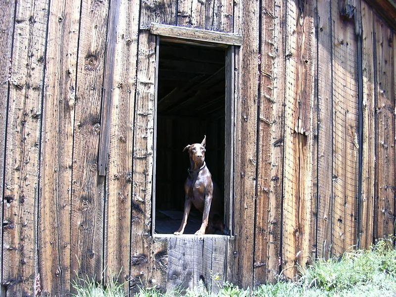 Colorado 2004 038.jpg
