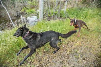 03.30.2016 Creek Dogs