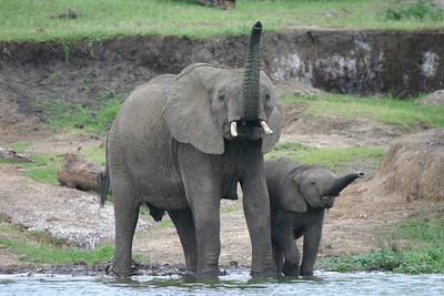 Uganda: Shoebill, Rift Endemics & Gorillas
