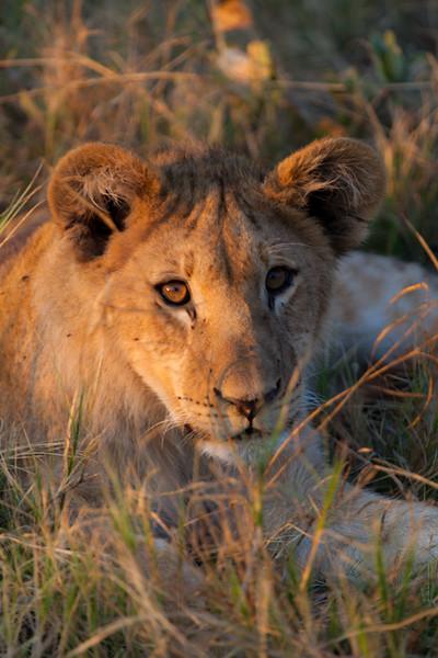 Botswana-52.jpg
