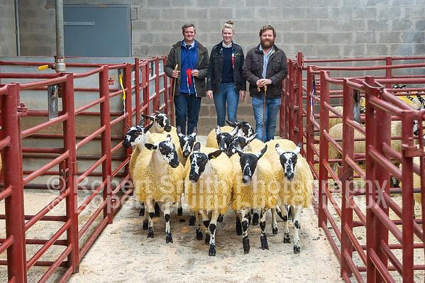 Longtown Mart Mule Ewe Lambs - September 18th 2018