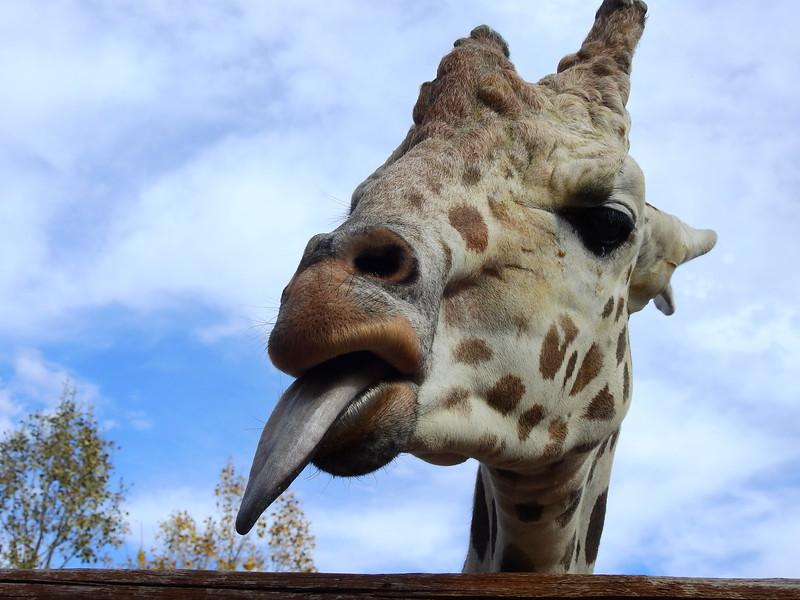 Cheyenne Mtn Zoo 2018 (2372).JPG