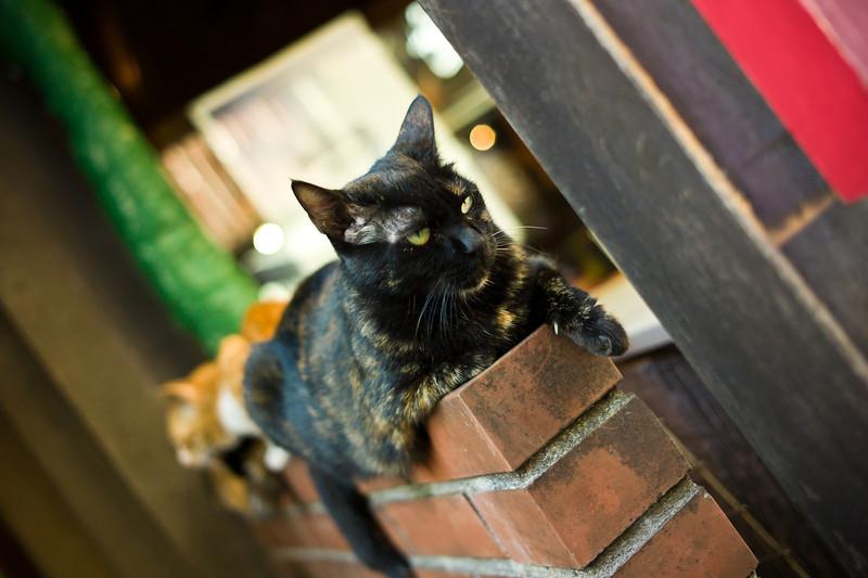Cats in Nakano
