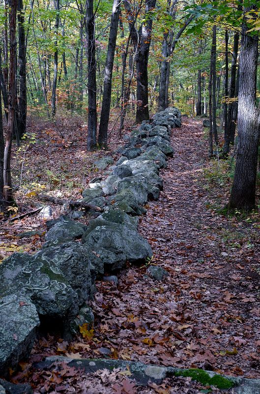 Stone wall through Whipple Hill in the fall